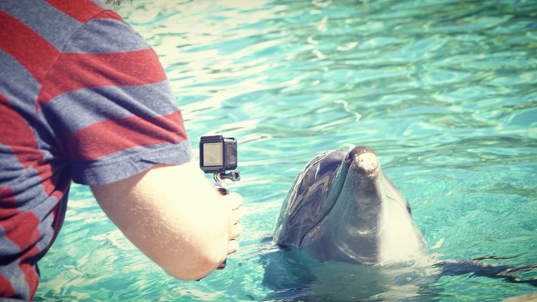 Filming Dolphins